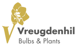Video marketing Vreugdenhil Bulbs Plants